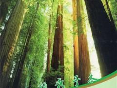 东莞市立晨木业有限公司    木材指接板、直拼板、集成材 (1)